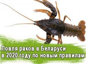 Ловля раков в Беларуси в 2020 году по новым правилам
